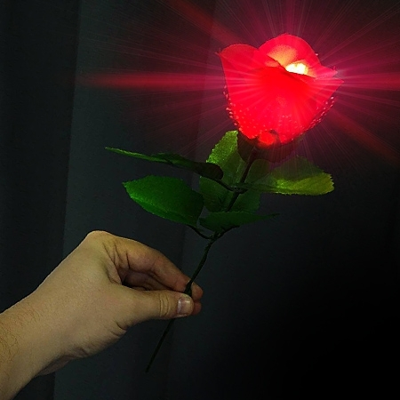 Light in the Rose Plus